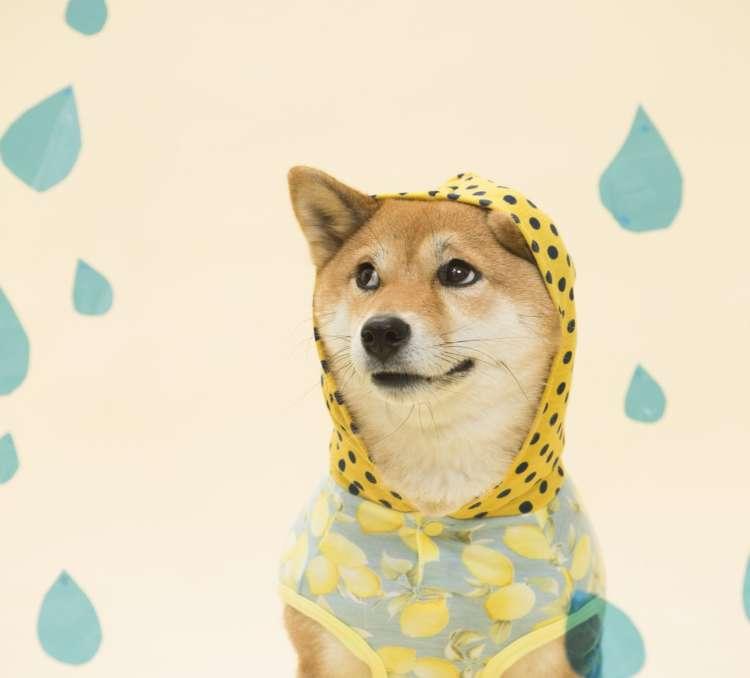 今日も雨~? え、明日も雨!? この時期だけ、梅雨がないってウワサのロサンゼルスに引っ越そうかしら……