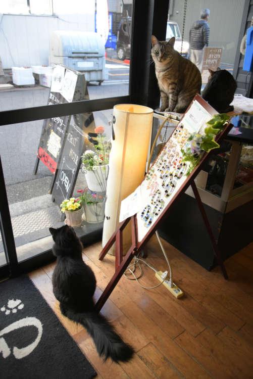 店で看板猫3匹がお待ちしています