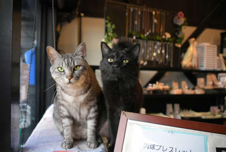 寺の捨て猫だったトラ君、動物病院で里親募集されていたクロ君も、今は立派な姿で接客
