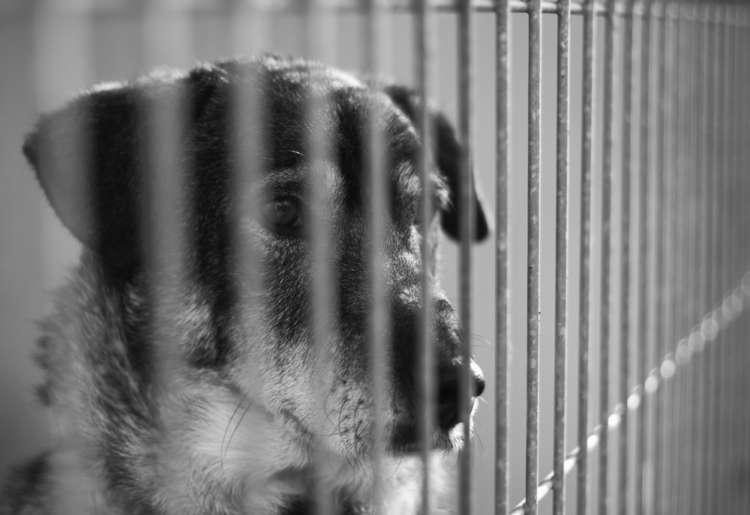 犬猫の保健所・愛護センターでの年間殺処分数とその現場