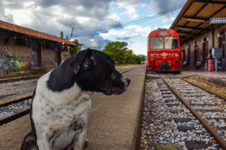 ペットカートで電車に乗るのはOK? 正しい電車の乗車方法について