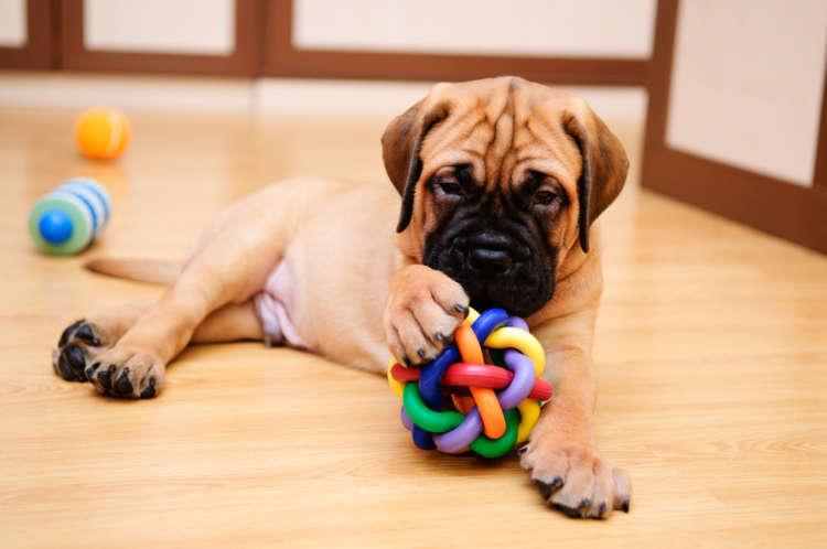 犬を楽しく留守番させよう! 留守番時におすすめのおもちゃを紹介