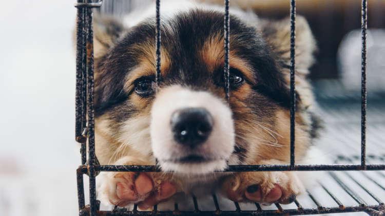 どうして犬を捨てるの? 捨てられた犬はどうなるの?