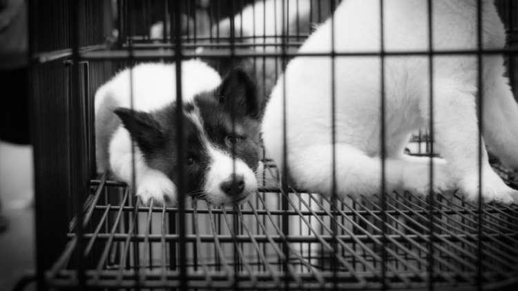 犬や猫の殺処分。どのように行われているか知っていますか?