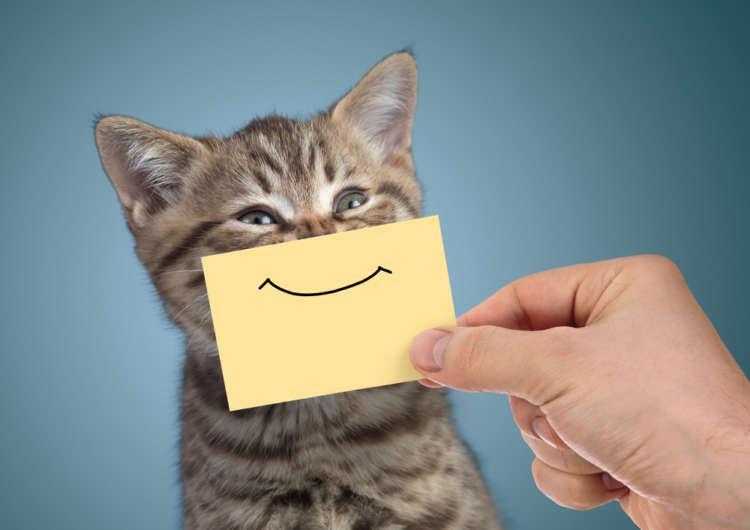 今すぐ使える! かわいい猫の顔文字一覧(ノ*ФωФ)ノ
