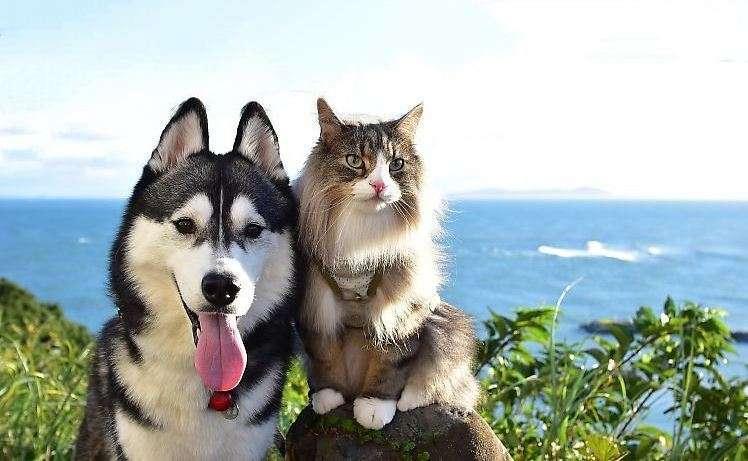 【一緒にどこまでも!】各地を旅するハスキーとニャンコ。絵になる2匹の、旅の思い出♡(8枚)