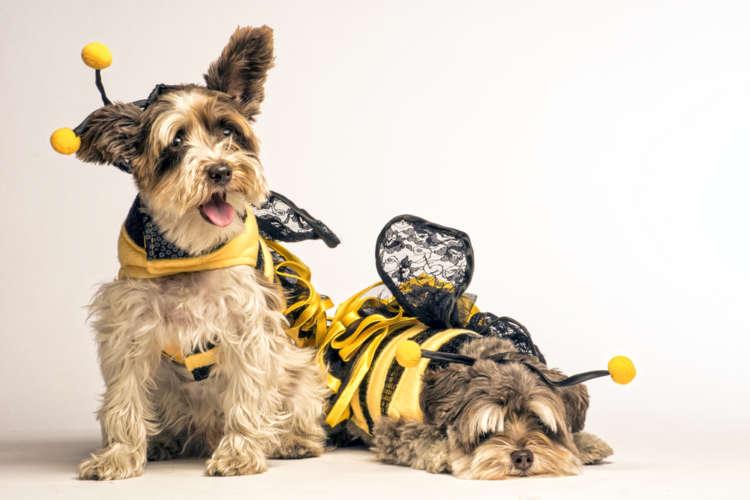 【獣医師監修】犬にはちみつを与えてもいい? はちみつの注意点について