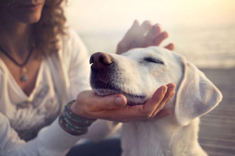 犬の喉のあたりに腫れがある。唾液腺嚢腫の症状や予防法について
