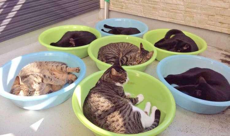 【にゃんこ干し♪】ポカポカ陽気にくつろぐ猫たち。かわいすぎる日向ぼっこが話題に…! 2枚