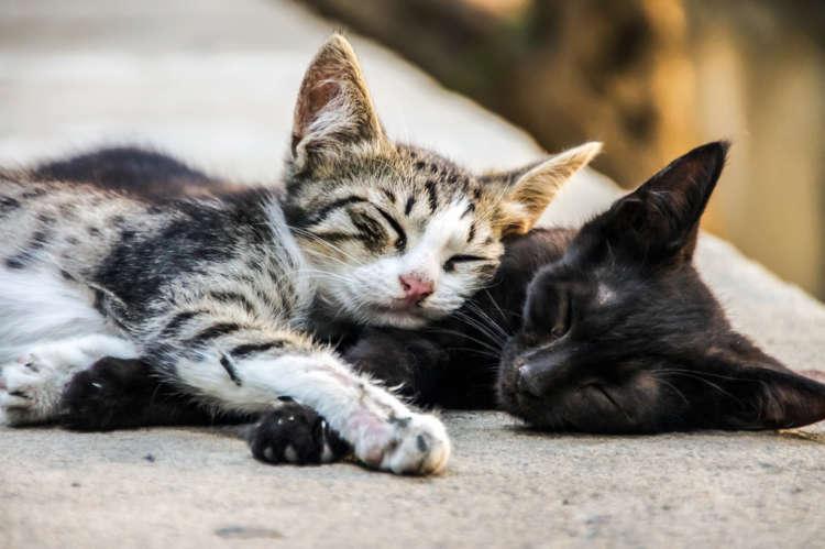 【獣医師監修】猫の血液型について。 特徴や種類から輸血時の注意まで