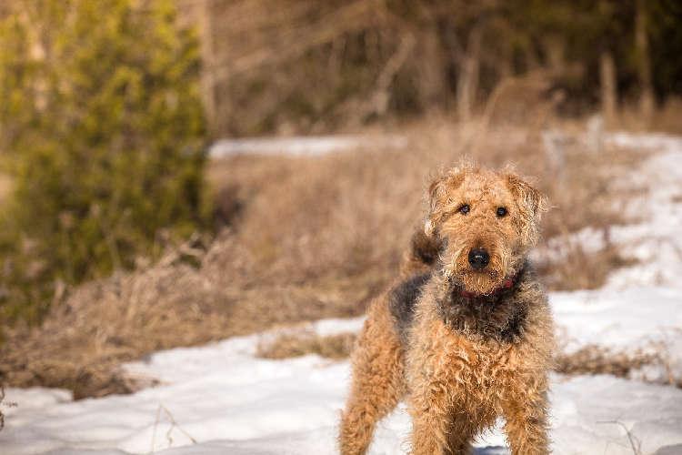 「身体の酸化」って知ってる?「抗酸化栄養素」で愛犬の健康を保ち、免疫力維持をサポートしよう!