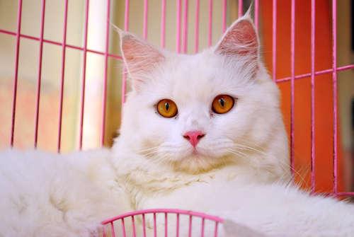 猫をケージ飼いする。そのメリットとデメリットについて