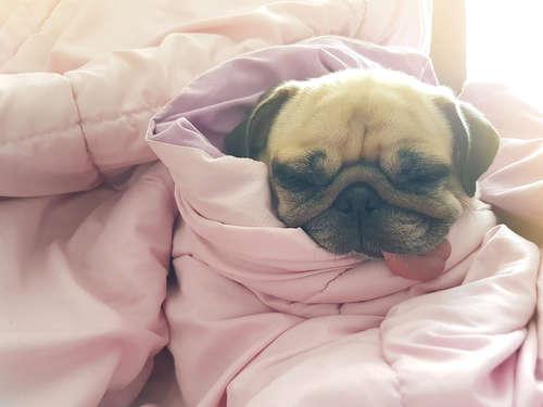 犬の急性胃炎 考えられる原因や症状、治療法と予防法