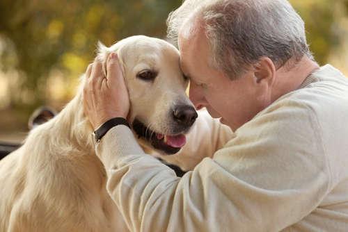 結膜炎だけじゃない! 犬の目が赤い時に考えられる病気とは