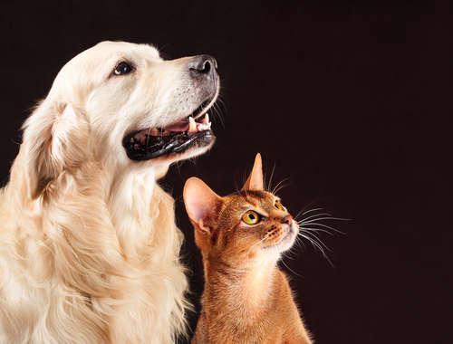 【ペットと考える災害対策】災害が起きたら、飼い主はどうすればいい?