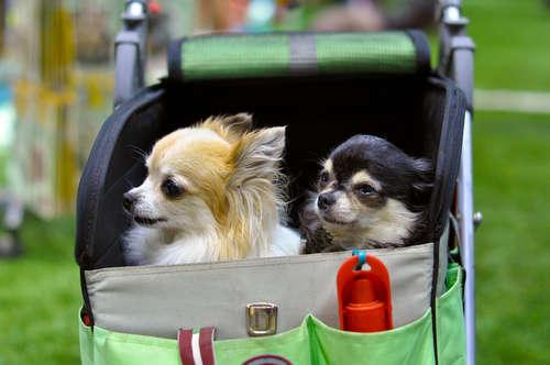 いざというときに役立つ! 飼い主さんと犬のための防災グッズ