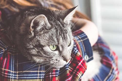 猫を守れるのは飼い主さんだけ! 災害にあう前に確認したいペット防災