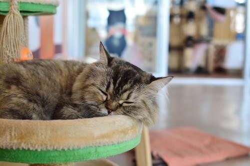 【猫の防災グッズ】いざというときに役立つ! 飼い主さんと猫のための防災グッズ