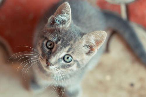 避難所では猫ちゃんとどう生活すればいい? 避難先での心構え