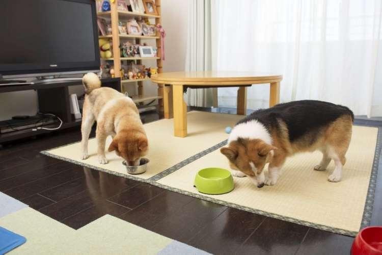 「食べ終わった」 「おいらはじっくり」