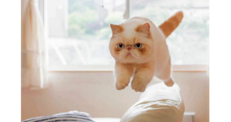 """【チャームポイントは頬っぺた♪】お顔に""""チーク""""が入った猫、ポテ君の愛らしさに…やられた♡ 10枚"""