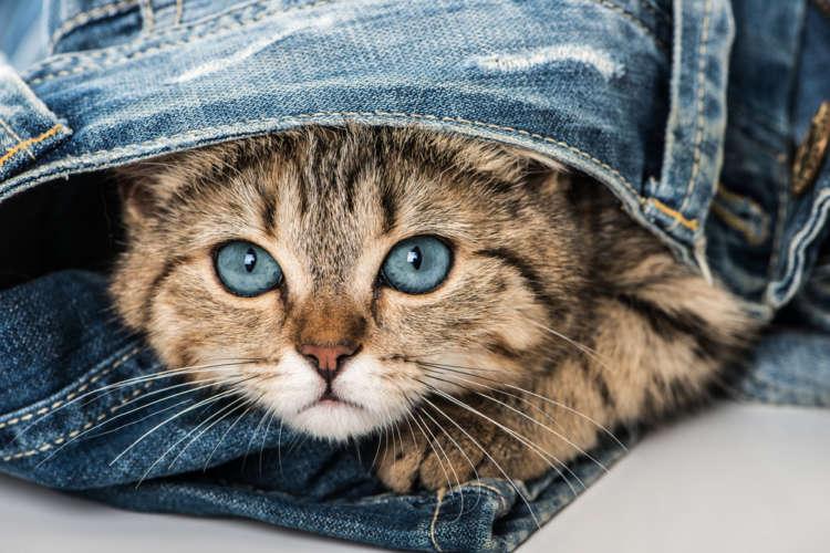 仔猫の目の色。成長に伴って色が変化する理由とは?