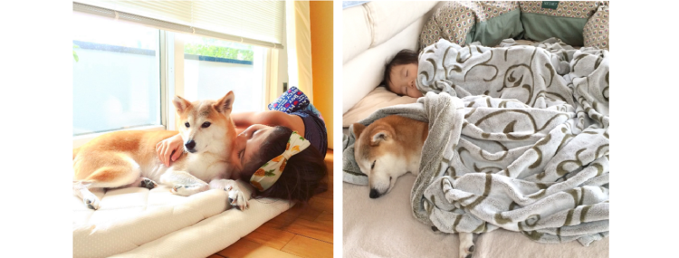 """【仲良し三姉妹♪】遊ぶのも寝るのも """"妹たち"""" と一緒な柴犬。温かい光景に、ホッコリが止まらない♡"""