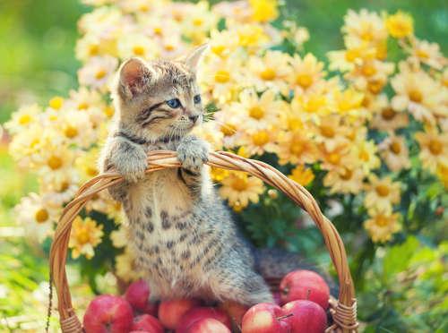 猫にりんごを与えても大丈夫? りんごのメリットや注意点
