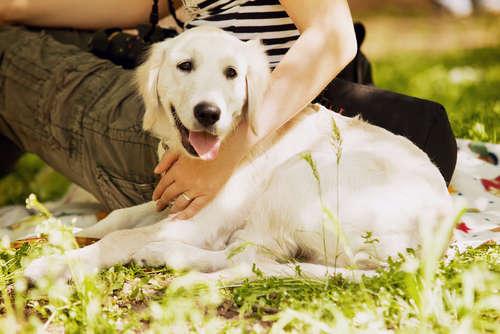 """愛犬はかけがえのない大切な""""家族"""" 読者から寄せられたエピソードをご紹介します"""