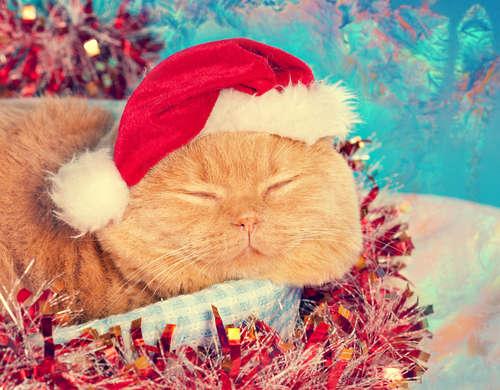 ワンちゃん猫ちゃんがサンタやトナカイに♪ クリスマスコスプレが可愛すぎ♡