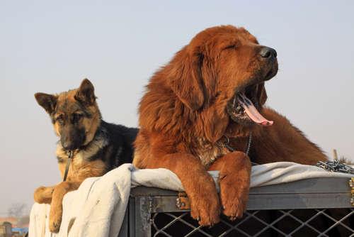「オーラベット®」とのコラボ企画♪ 愛犬の可愛らしいあくび写真をとってWEB CMに出演しちゃおう♡