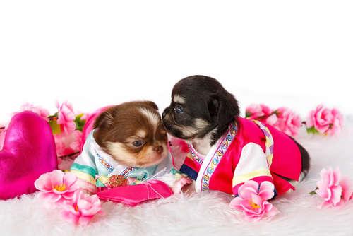 ワンちゃん猫ちゃんたちの和装にほっこり♡  お正月は和風コスプレをしよう!