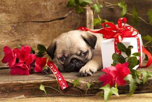 バレンタインに可愛く着飾っちゃおう! ワンちゃん猫ちゃんのキュートなコスプレにキュン♡