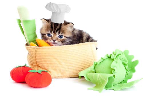 猫のための手作りご飯。仔猫に与えても大丈夫?