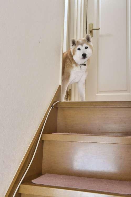 【好き】玄関を見下ろせる2階の踊り場