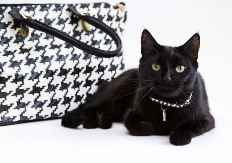 大人っぽく、個性的に、ほっこりと…、どれが好き? 猫をモチーフにしたお洒落&こだわりグッズ特集