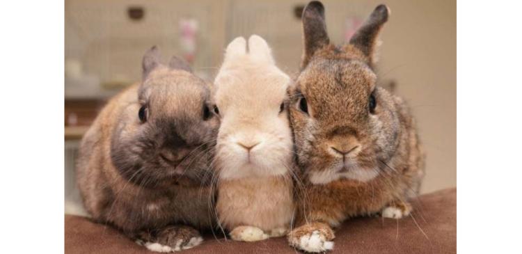 """【密着して、離れない♡】ウサギさんたちのモフモフ """"おしくらまんじゅう"""" が暖かそう…(*´ェ`*)"""