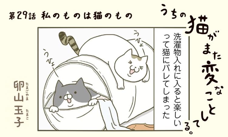 第29話:私のものは猫のもの