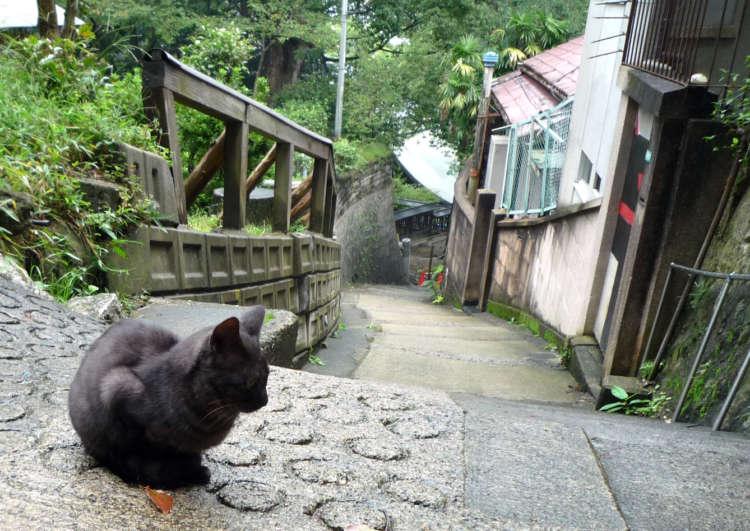 猫好きなら一度は訪れてみたい、猫の町「尾道」とは!?
