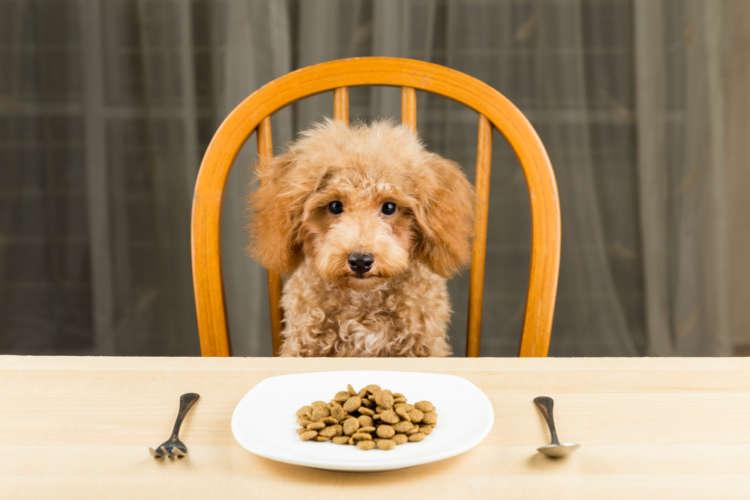 トイ・プードルの仔犬に与えるエサ、その量や種類について