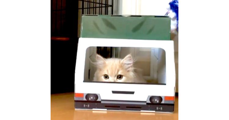 【出たり入ったり♪】トラック形の箱からオモチャを狙うネコ → 飛び出す仕草が、かわいすぎて困った♡