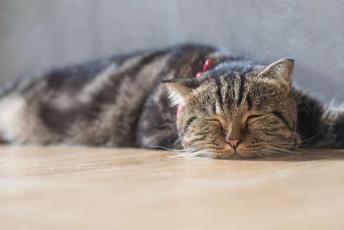 アナタのネコは もっともっと長生きできる! ネコの死因第一位 「慢性腎臓病」を防ぐ方法
