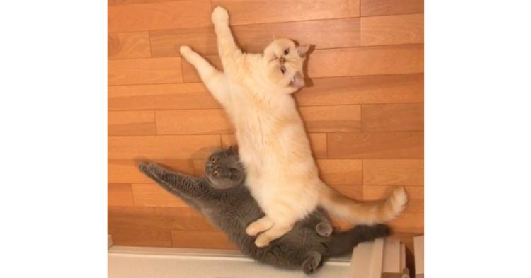 重なり合ってマッタリ…♪ 人にはよく分からない『ネコたちの時間』が平和すぎてほっこり(*´艸`*)♡