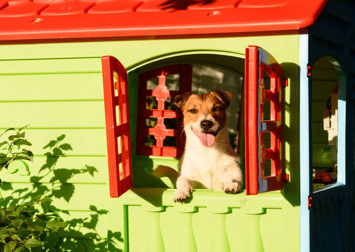 犬を外飼いするためにできること。外飼いのデメリットと注意点