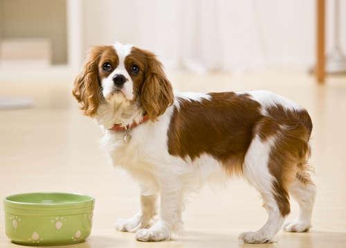 犬に山芋を与えていい? 山芋のメリットや注意点について