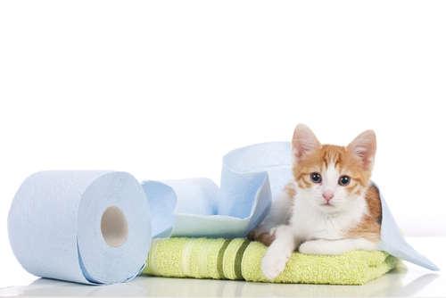 猫が頻尿気味で、1回に出す尿の量が少ない。下部尿路疾患の原因と対策