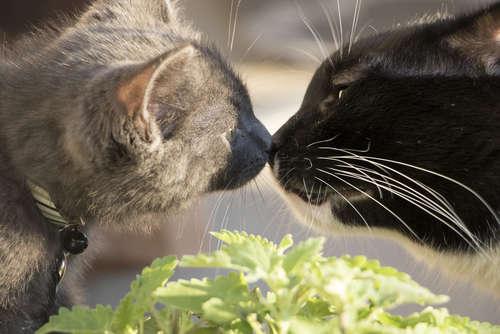 猫の鼻キス!  猫同士が鼻と鼻をくっつける意味とは