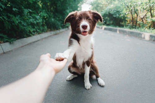 「お手」を命じてないのに犬が手を乗せてくる。これはなぜ?