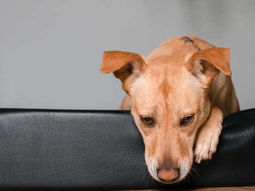 犬の脳腫瘍 考えられる原因や症状、治療法と予防法