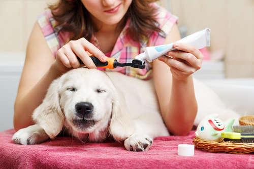 大切な歯を守ろう。犬の歯医者について